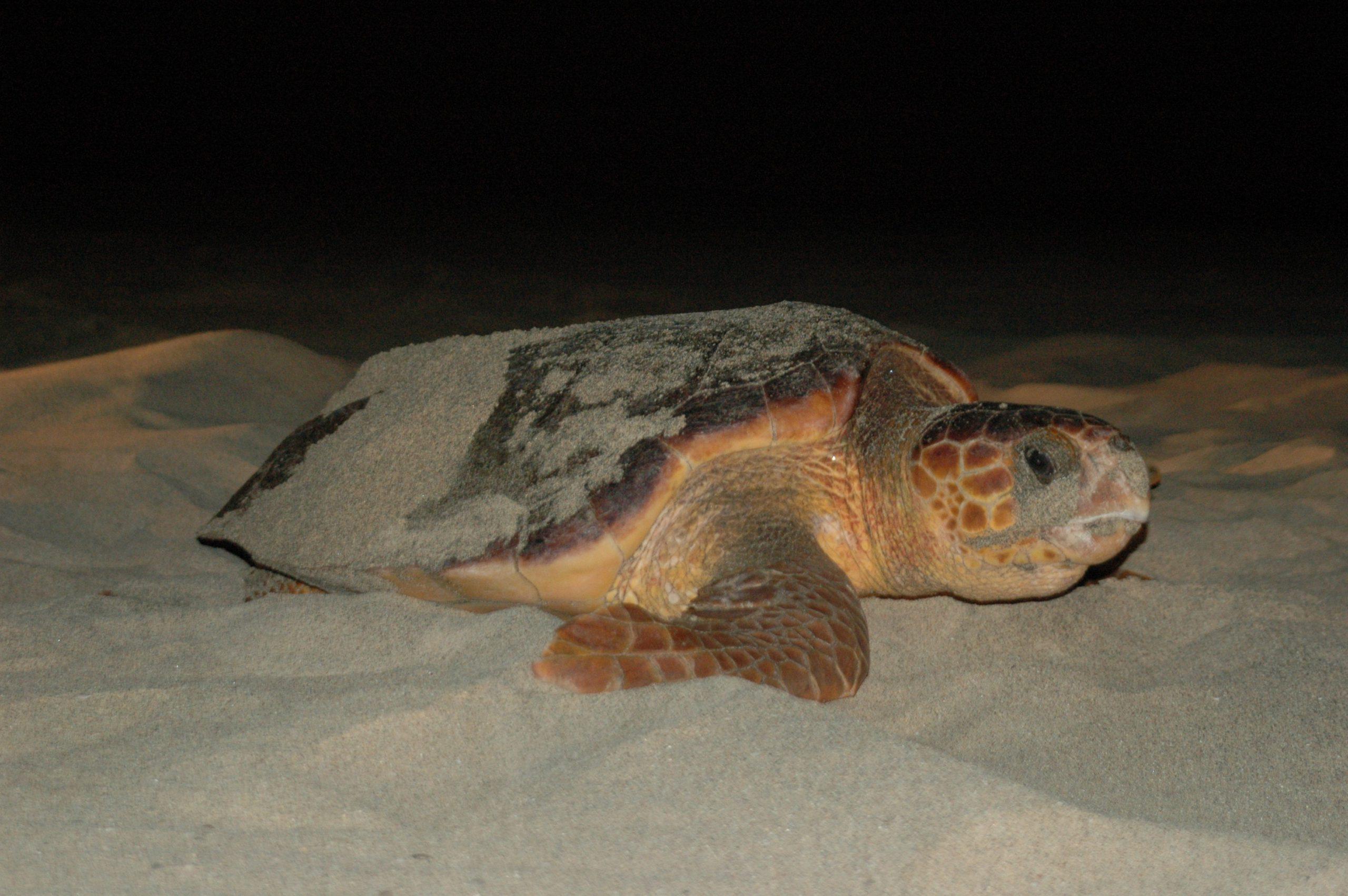 Tartarugas Boa vista